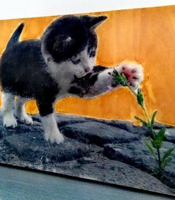 photo Petit tableau : un chaton étonné,chaton trop mignon noir et blanc