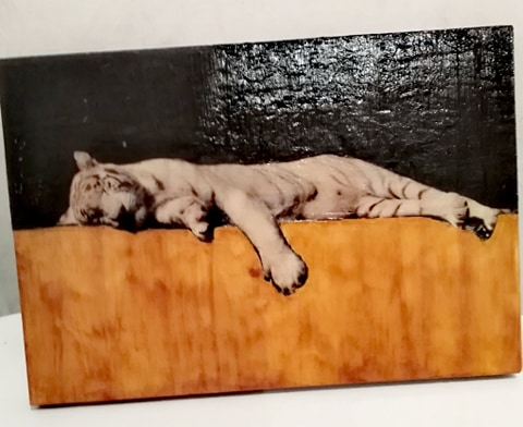 photo lion qui se repose