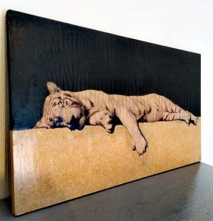 photo une lion sur bois