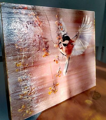photo tableau oiseau sur bois