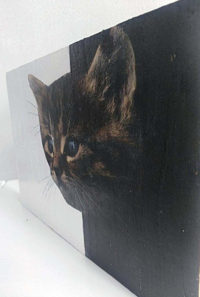 Diy déco: la maison de déco,  cadeaux originaux et chat un regard drôle