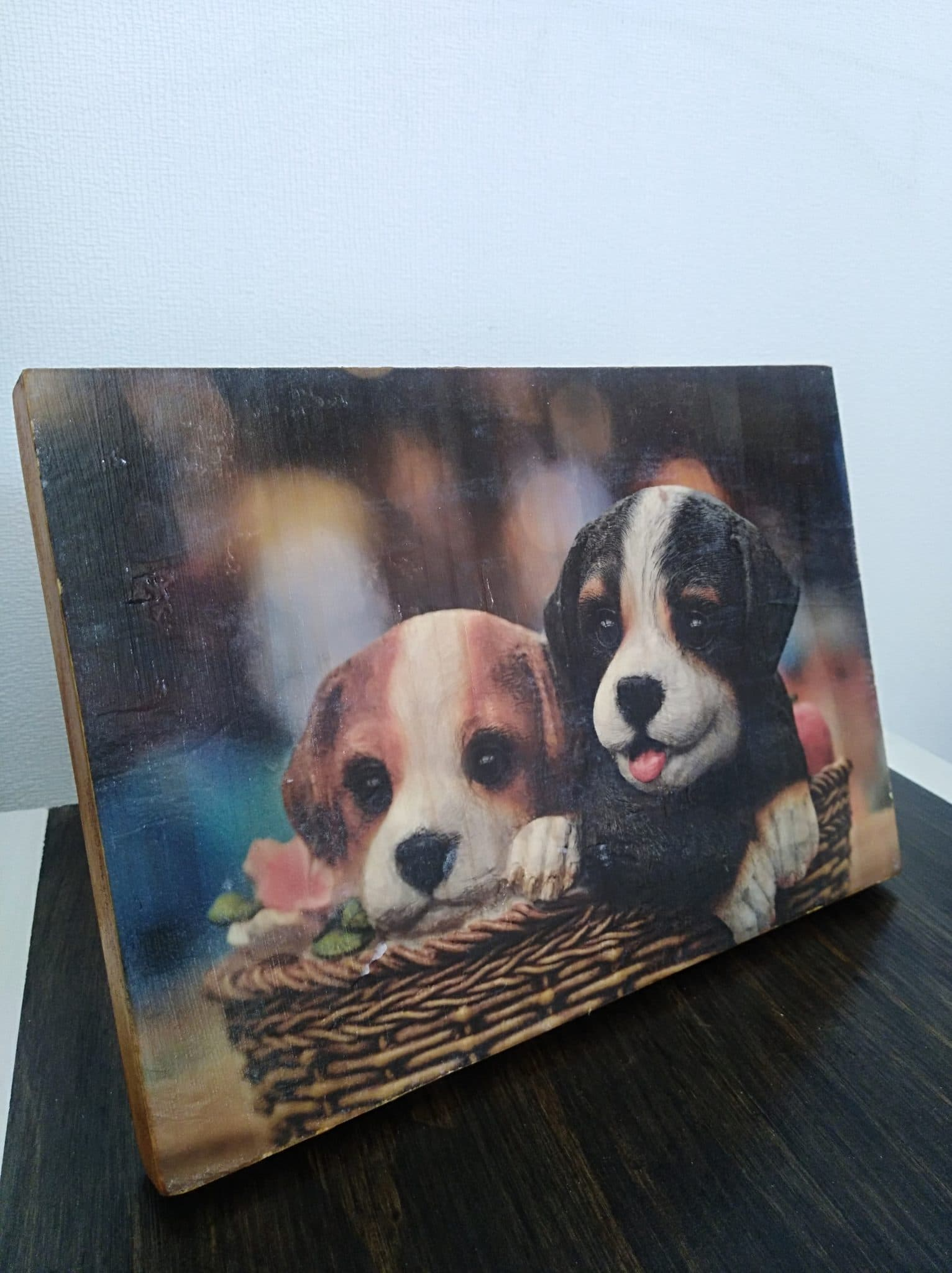 photo deux chiots ensemble déco