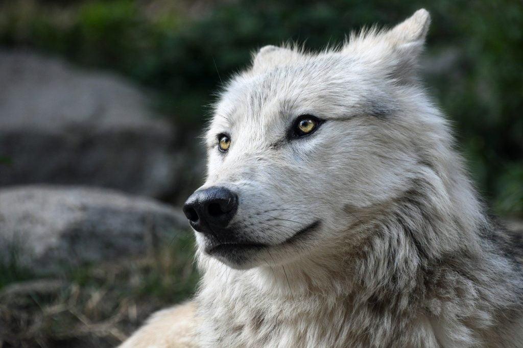 si tu ne veux pas êtres volé marche avec le loup