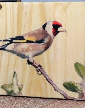 tableau décoration, oiseau chardonneret de jardin. le